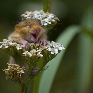 aww yeah flowers.jpg