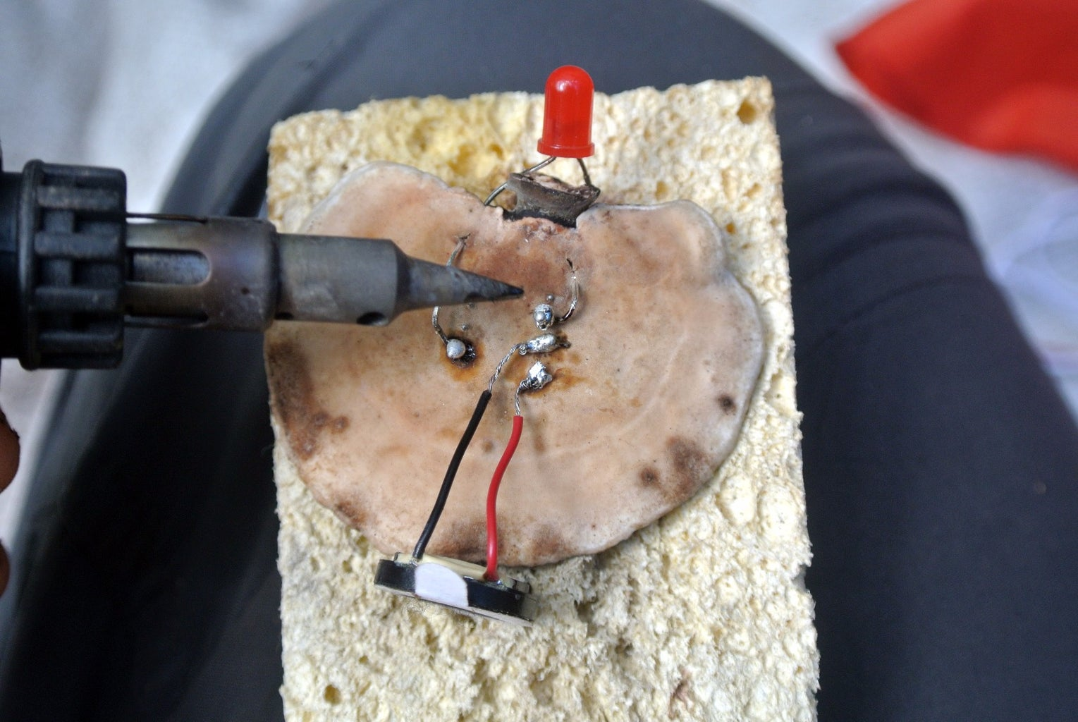 Connecting Microcontroller and Speaker