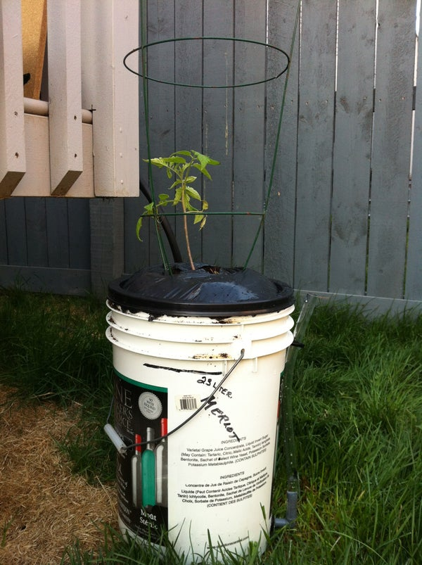 How to Build a Self-watering Planter.