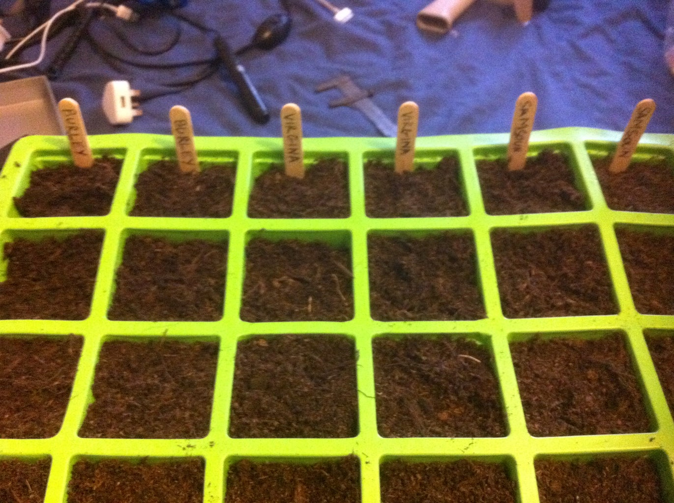 Germinating the Seeds