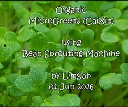 Home-Grown Aeroponic Organic MicroGreens
