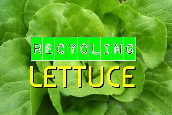 Recycling Lettuce