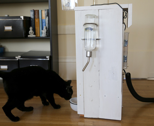 Automated cat feeder with web interface