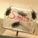 Small Surprise Box