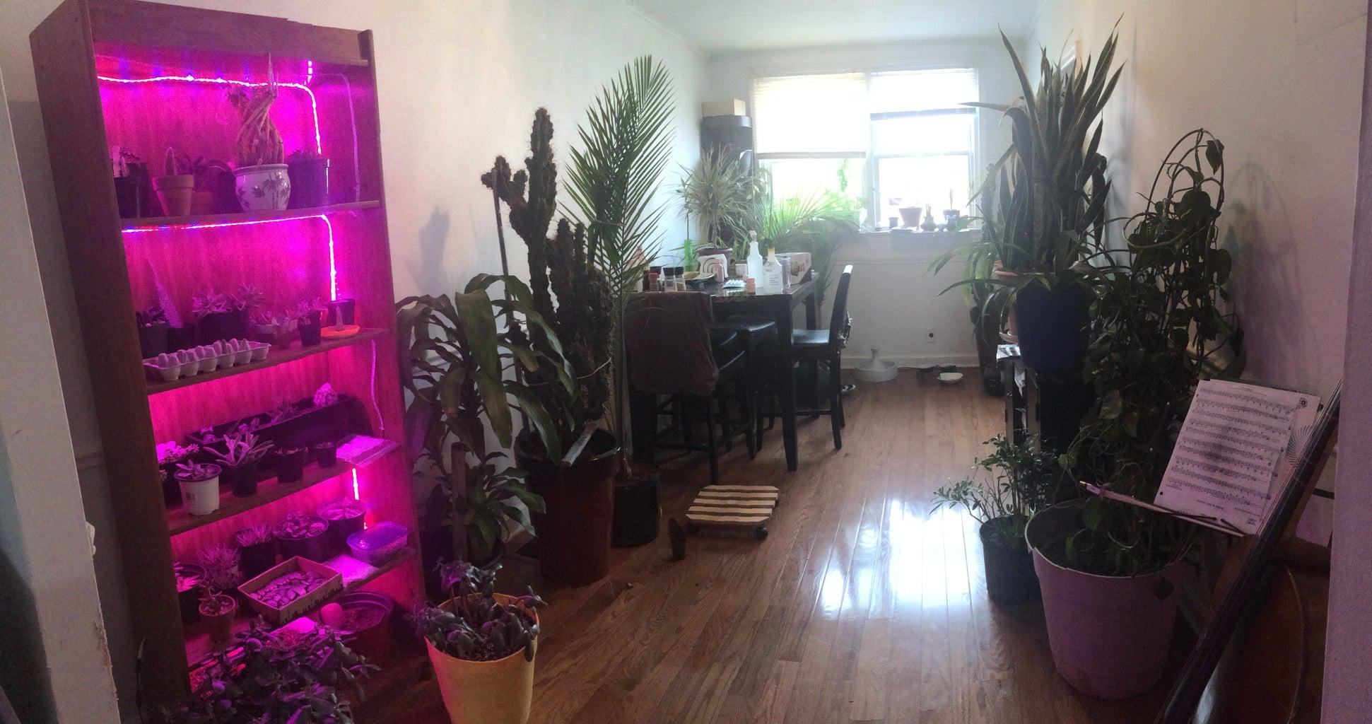 Grow Case - Plants Not Books
