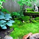How to Create a Moss Garden