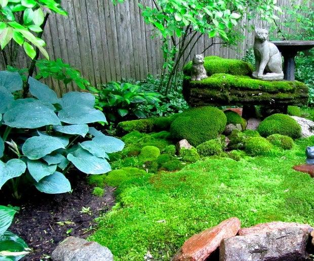 How To Create A Moss Garden 5 Steps, Growing A Moss Garden
