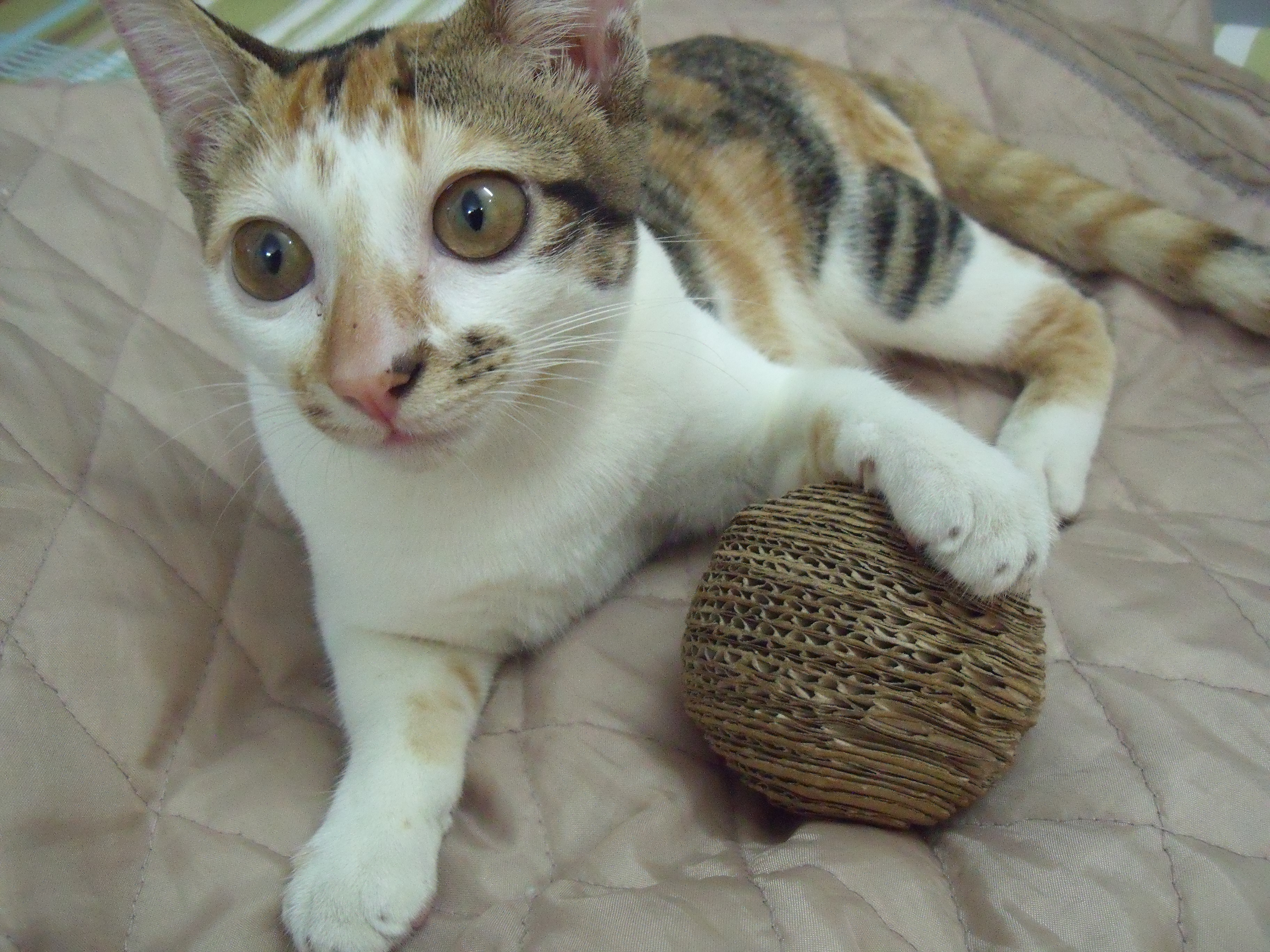DIY eco friendly cardboard ball for cat