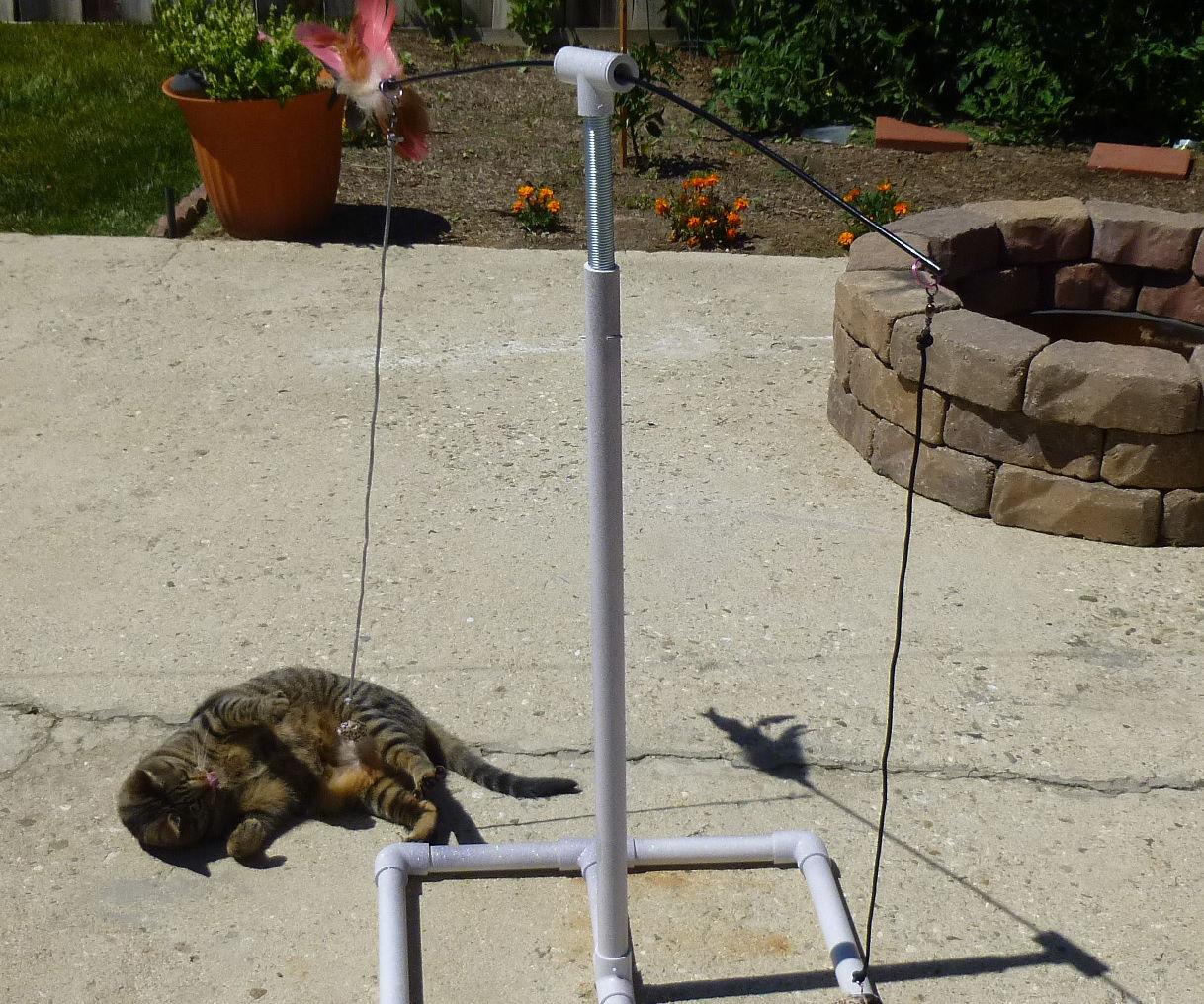 Cat Spring 'n Swing