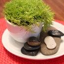 Tiny Green Tea Garden