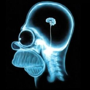 homer-simpson-brain-1024.jpg