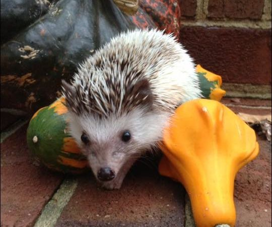 How To Take Care Of A Hedgehog 10 Steps With Pictures Instructables
