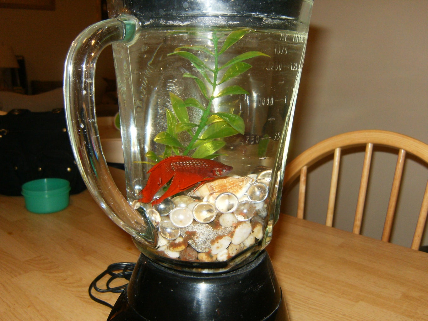 Will My Blender Work As a Fish Tank?