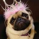 PrincessPug10