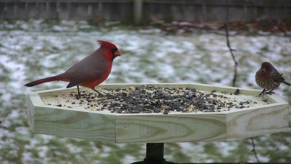 Bird Feeder Photo Port