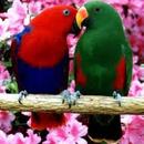 birdycrazy
