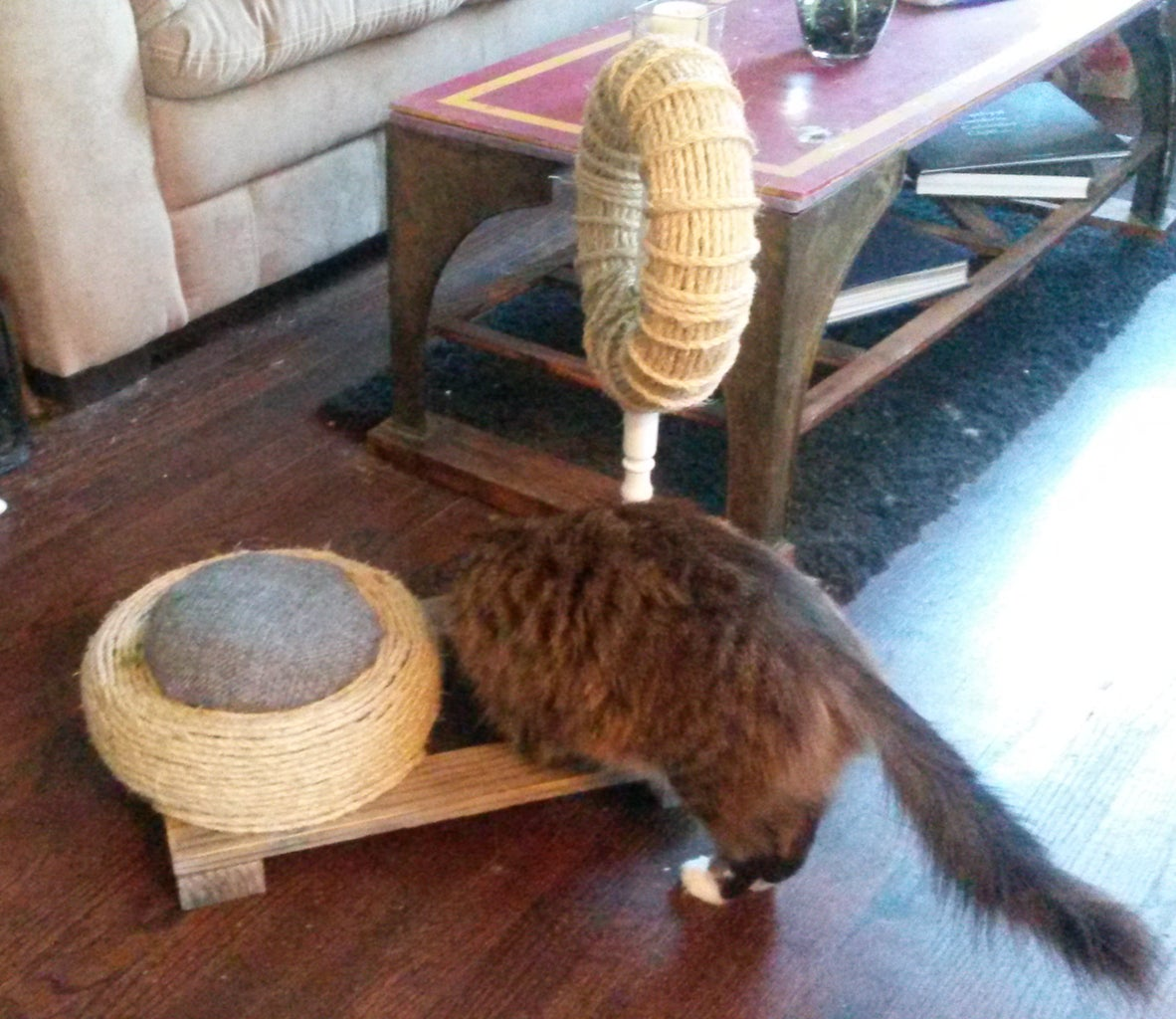The Cat Test . . .