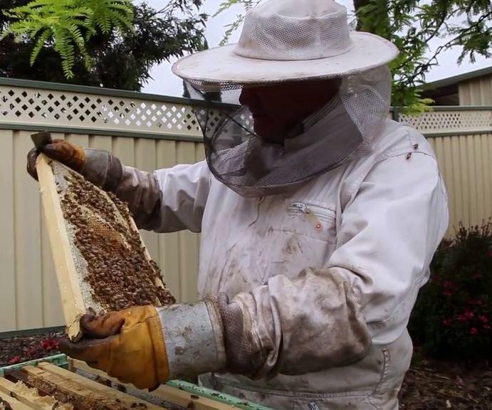 Basics for Backyard Beekeeping