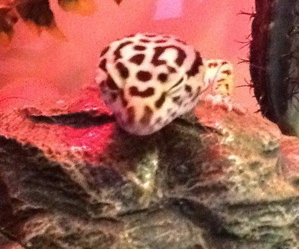 Gecko Leash With Harness