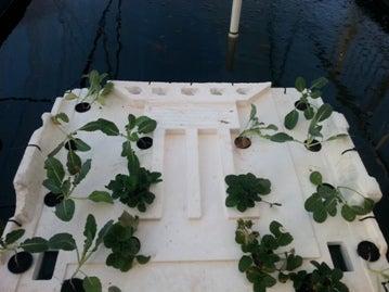 Strawberry and Brocceli Raft