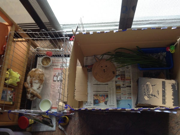 What You Need Inside a Rabbit Cage