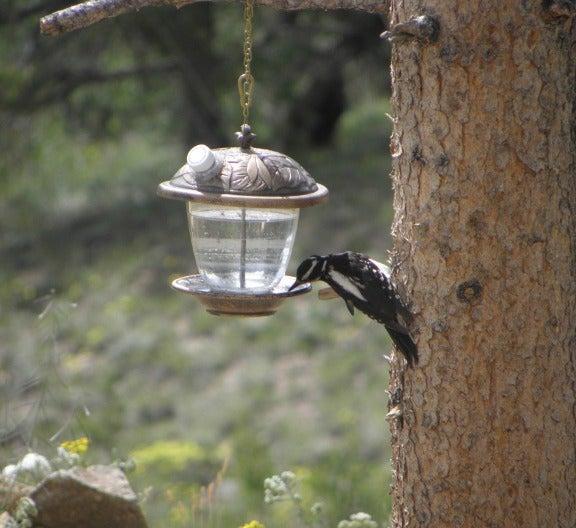 Convert a Bird Feeder Into a Wild Bird Waterer