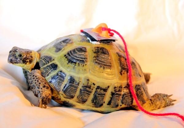 Tortoise Tracker (Analogue Version)