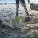 How to remove a coconut from the husk