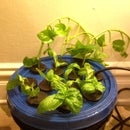 Make Living Copies of Your Favorite Plants... Automagicallly