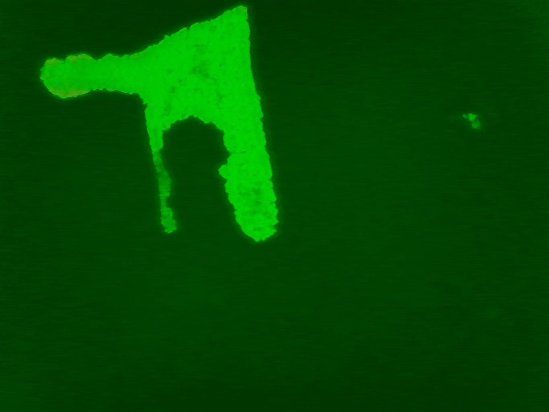 USB Fluorescence Microscope