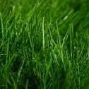 Go Green by Growing Green: How to Extract Energy from Grass
