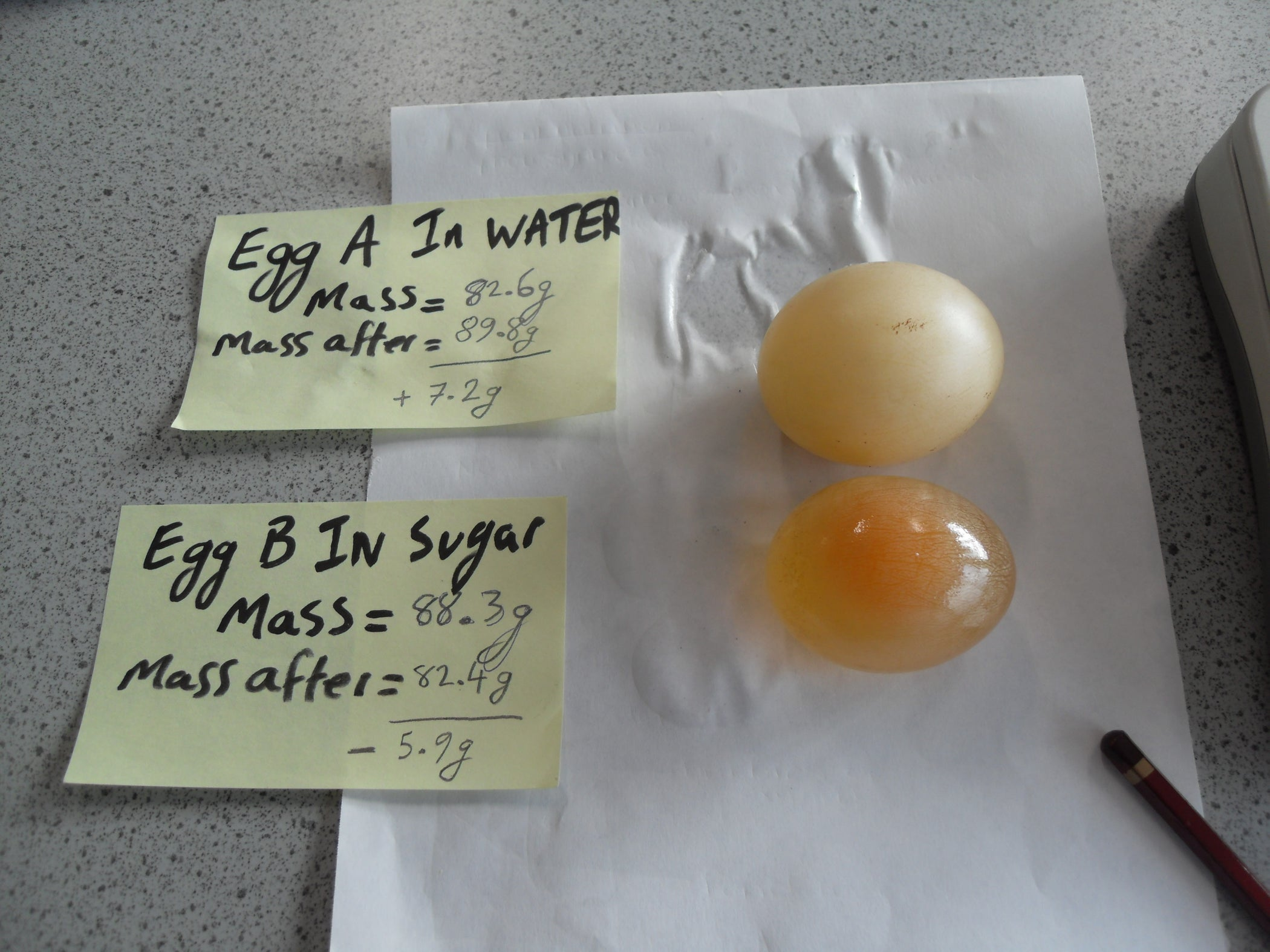 Egg Osmosis Lab Worksheet - worksheet