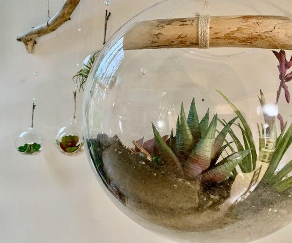 Air Plant Terrarium, Natural Hanging Display