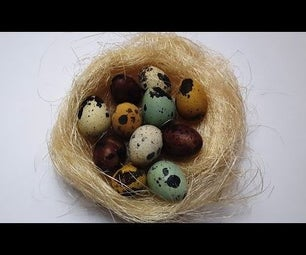 Naturally Dyed QUAIL EGGS - Experiment