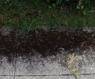Remove Moss From Cement Without Chemicals or a Pressure Washer
