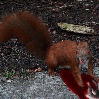 evil squirrel 2.jpg