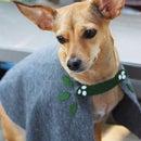 DIY No-Sew Doggie Cape