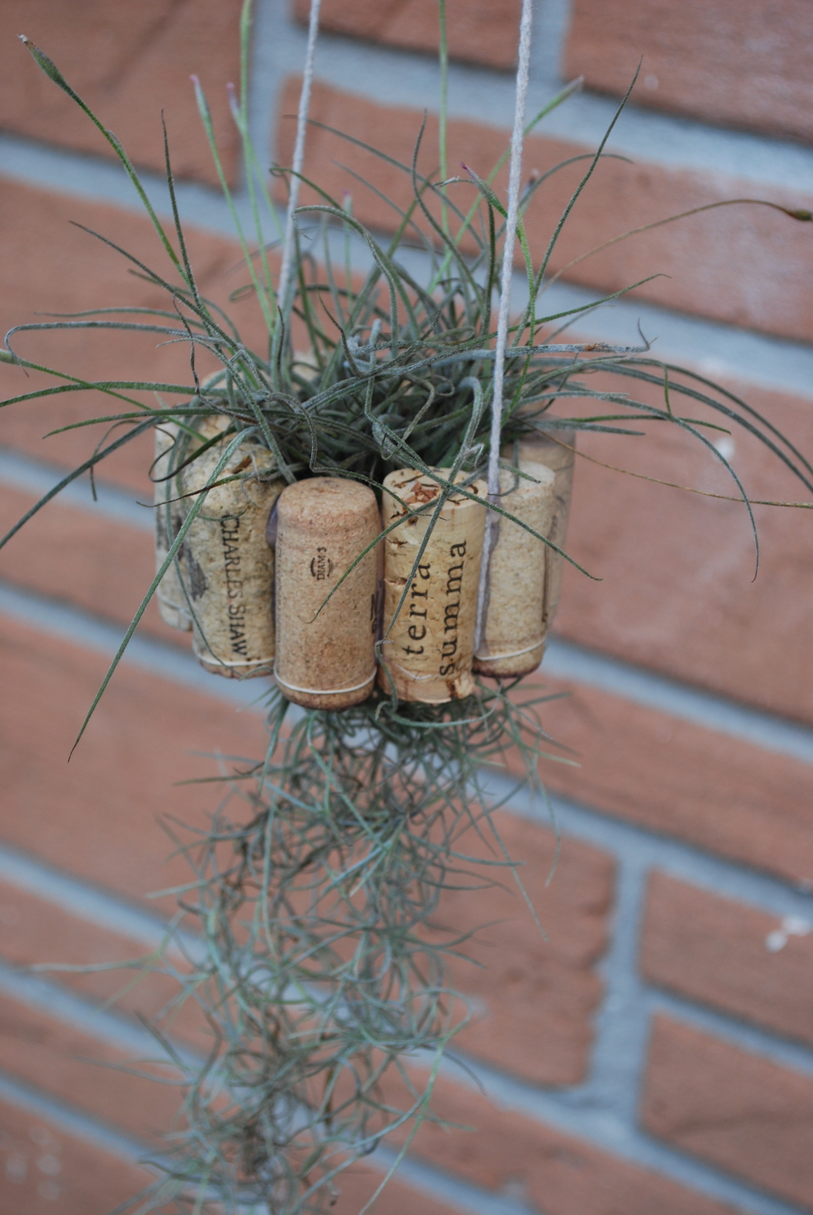Hanging Air Plant Basket from Recycled Wine Corks