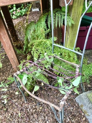 Chair Trellis For Climbing Vines 3, Chair And Trellis