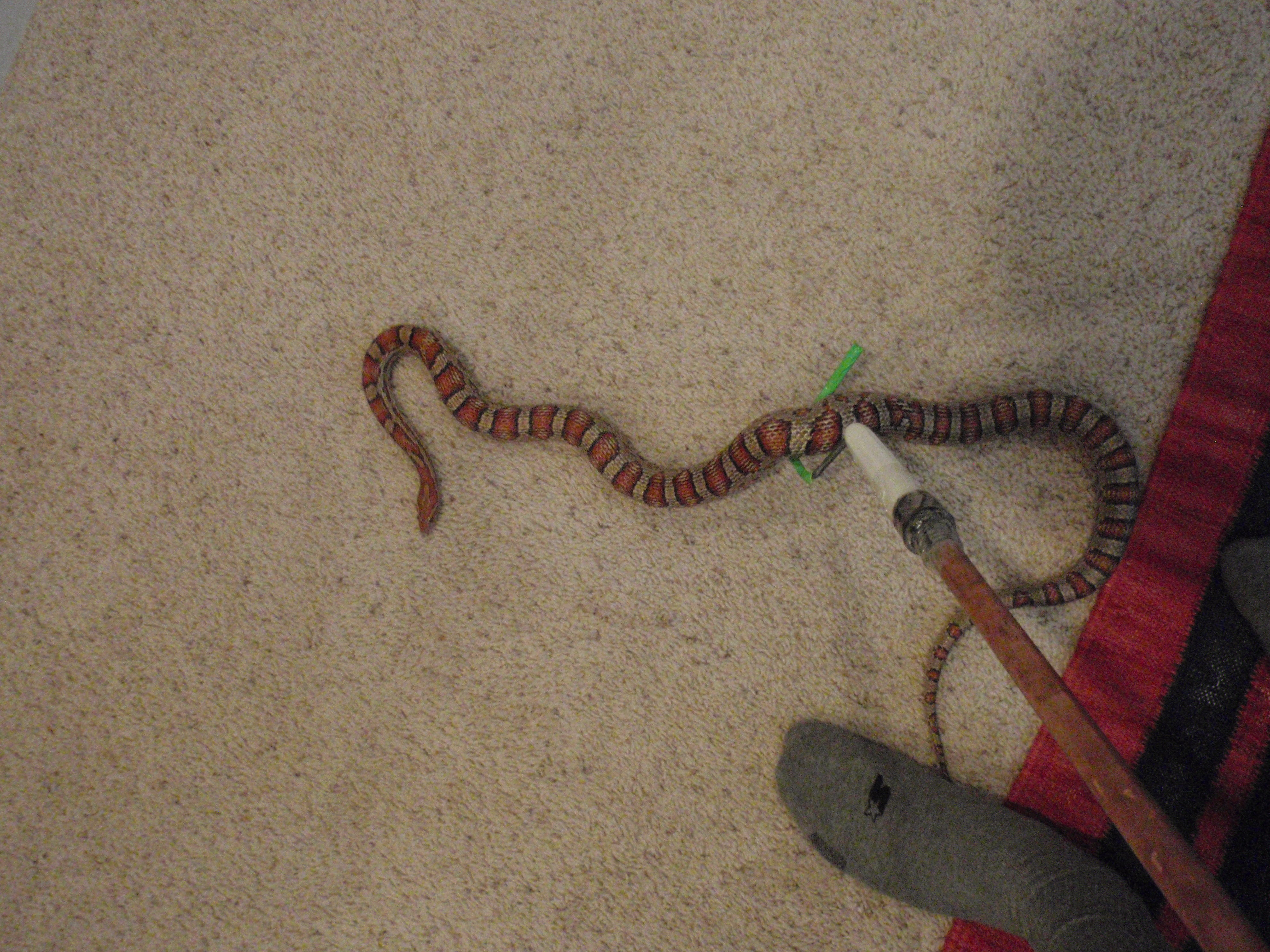 New and Improved Snake Hook