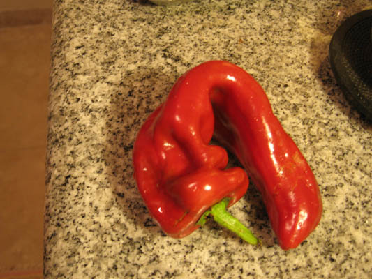 Ajvar: Balkan Pepper Spread!
