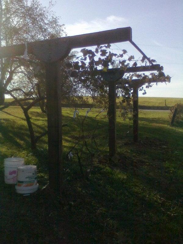 Build a Grape Trellis to Last a Lifetime