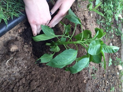 Use Fingers and Create an Indented Circle at the Base of the Stem.
