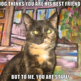 YOU ARE STAFF.png