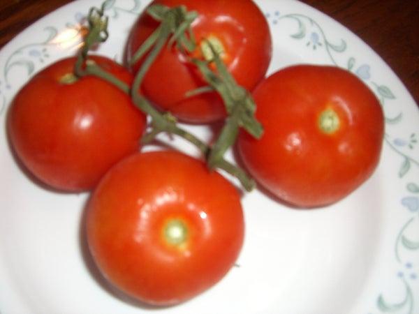 Get a Bigger, Sweeter, Earlier Crop of Tomatos