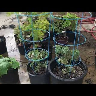 How to Build a DIY Automatic Plant Watering System With WiFi Alerts