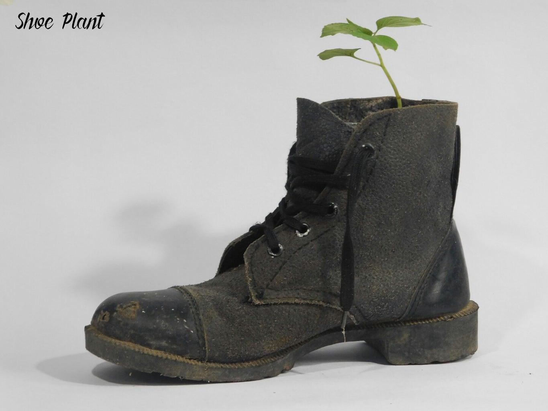 Shoe Plant