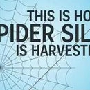 How Spider Silk Is Harvested