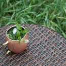 Northern Peppermint Green Julep