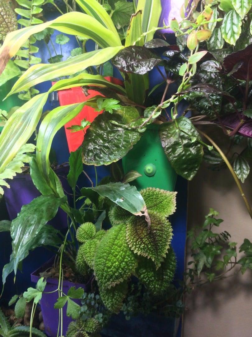 Plants: Tropical Houseplants